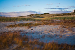 Ogunquit's Sway. This photograph was taken at Ogunquit Beach, Maine in 2015.  I was awed by the beauty of the sunset light hitting the grassy and sandy dunes Royalty Free Stock Photos