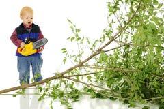 Oh нет! Я отрезал вниз с дерева фаворита ` s папы! Стоковое Изображение RF