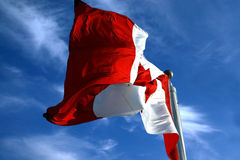 Oh Canada!. The beautiful symbol of Canada. This is a great shot of it blowing in the wind royalty free stock photos