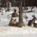 Oh cervos! imagens de stock royalty free