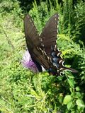 Oh farfalla Immagini Stock Libere da Diritti