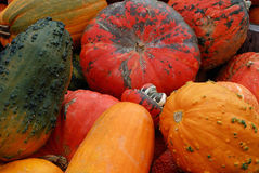 Oh, My Gourd! Royalty Free Stock Image