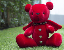 Oh niedźwiedź Fotografia Stock