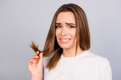 Oh no! Close up portrait of frustrated young brown haired woman. Holding her hair wih separated dry ends, standing on a light grey background royalty free stock photo