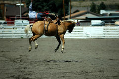 The Oh No! Moment. Rodeo bronc rider at the moment where he is being bucked off Royalty Free Stock Photos