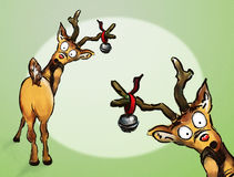 Oh no! Two Christmas Reindeer Stock Image