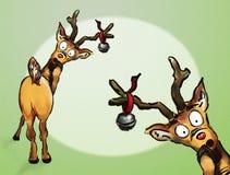 Oh nr! Het Rendier van Kerstmis twee Stock Afbeelding