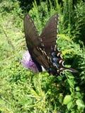 Oh vlinder Royalty-vrije Stock Afbeeldingen