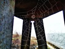 Oh what a mighty web you weave.Jpeg royalty free stock photos