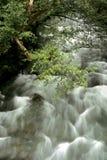 Ohanapocosh Fluss an La-WIS-WIS Stockfotografie