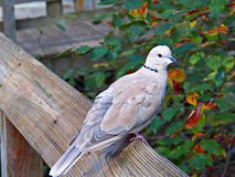Ohio Bird Sanctuary in Mansfield, Ohio Royalty Free Stock Photos