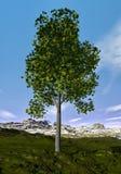 Ohio buckeye tree - 3D render Royalty Free Stock Image