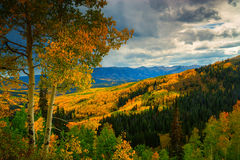 Ohio Pass. Shows off it's beautiful colorful Aspen trees in Colorado during autumn Royalty Free Stock Photography