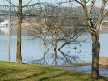 The Ohio River overtakes the Banks. The Ohio River rising to swallowing the land around it royalty free stock photography