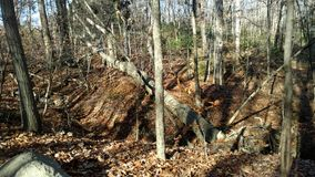 Ohio skogsmarker Royaltyfri Foto