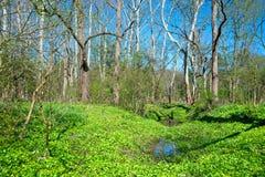 Ohio-Sumpfgebiet im Vorfrühling lizenzfreie stockbilder