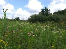 Ohio vildblommafält Arkivfoton