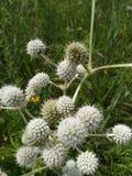 Ohio-Wildflower-Feld Stockfoto