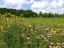Ohio-Wildflower-Feld Lizenzfreie Stockfotografie