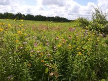 Ohio-Wildflower-Feld Lizenzfreies Stockfoto