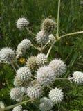 Ohio-Wildflower-Feld Stockfotos