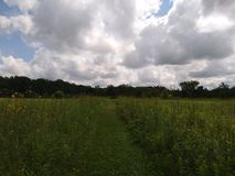 Ohio-Wildflower-Feld Stockbild