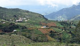 This is ohiya tea estate near Horton place stock photo