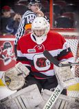 OHL Ottawa 67s Stock Photography
