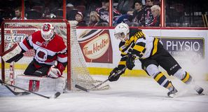 OHL Ottawa 67s Royalty Free Stock Photo