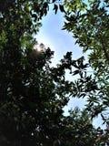 Ohne Bäume würden unsere Leben so schwierig sein stockbilder