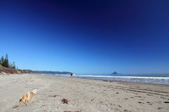 Ohope Beach, Whakatane, New Zealand Stock Photo