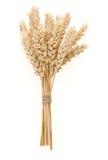 Ohr der Weizen getrennt auf Weiß stockfotos