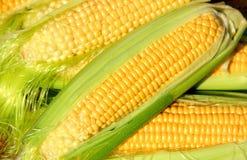 Ohr des reifen Mais stockfotografie