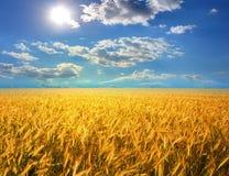 Ohr des Weizens Lizenzfreies Stockfoto