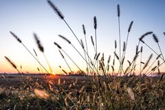 Ohren bei Sonnenaufgang Lizenzfreie Stockfotos