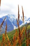 Ohren des gelben Grases wachsend auf der Wiese Lizenzfreies Stockfoto