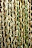 Ohren des Grases Stockbild