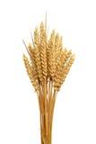 Ohren des Weizens.