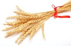 Ohren des Weizens Lizenzfreies Stockfoto