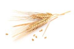 Ohren des Weizens lizenzfreie stockfotografie