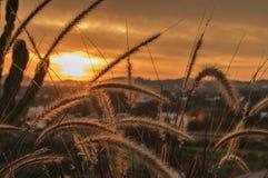 Ohren des Weizens Lizenzfreie Stockfotos