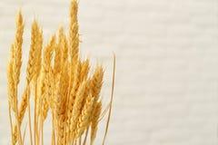 Ohren des Weizens auf Hintergrund von Weiß lizenzfreie stockfotos