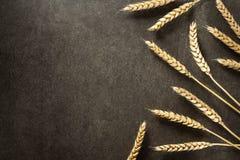 Ohren des Weizens auf schwarzem Hintergrund Lizenzfreies Stockfoto