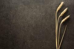 Ohren des Weizens auf schwarzem Hintergrund Lizenzfreie Stockfotos