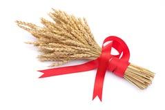Ohren des Weizens gebunden mit rotem Farbband Lizenzfreie Stockfotografie
