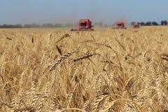 Ohren des Weizens gegen die Erntemaschinen und das Feld Stockfoto
