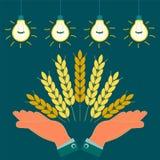 Ohren mit goldenen Körnern des Weizens in seinen Händen lizenzfreie abbildung