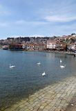 Ohrid, Macedonia, on Easter. swans in lake Royalty Free Stock Images