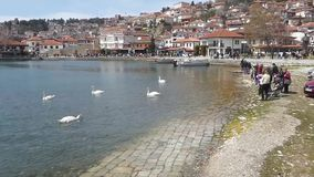 Ohrid, Macedonia, on Easter. Tourist feeding swans stock video
