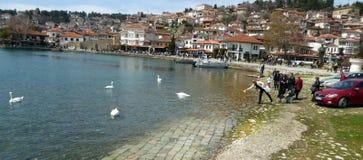 Ohrid, Mazedonien, auf Ostern Fütterungsschwäne des Touristen Lizenzfreie Stockbilder